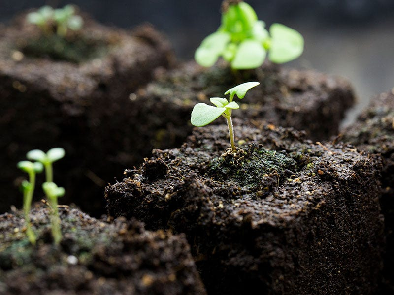 Starting Seeds Indoors: Unhealthy seedlings and what you can do about them