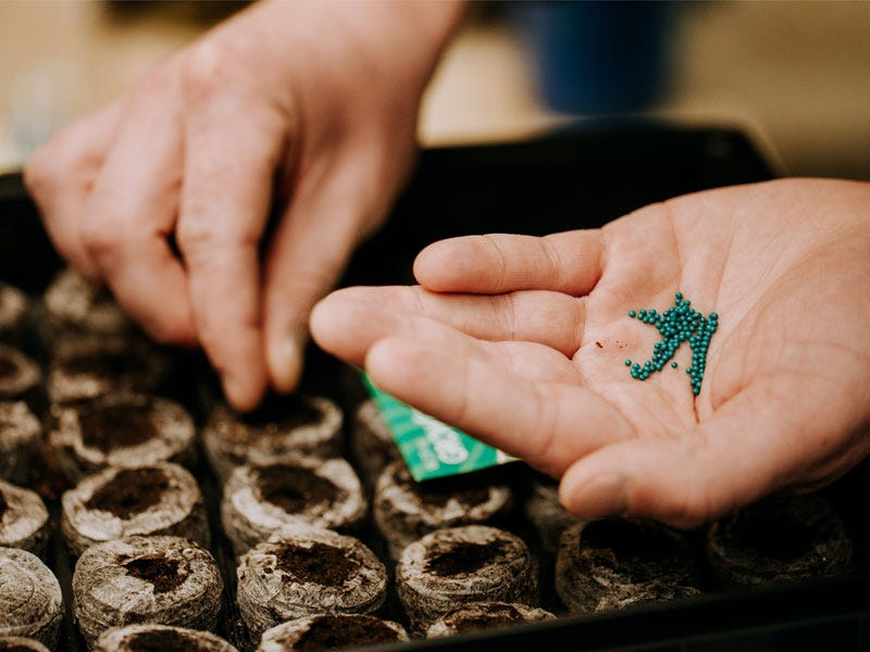 Starting Seeds Indoors: When to plant, what to plant, and common mistakes