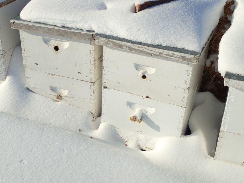 Preparing Your Beehives for Winter: Best Practices for Cold Climates