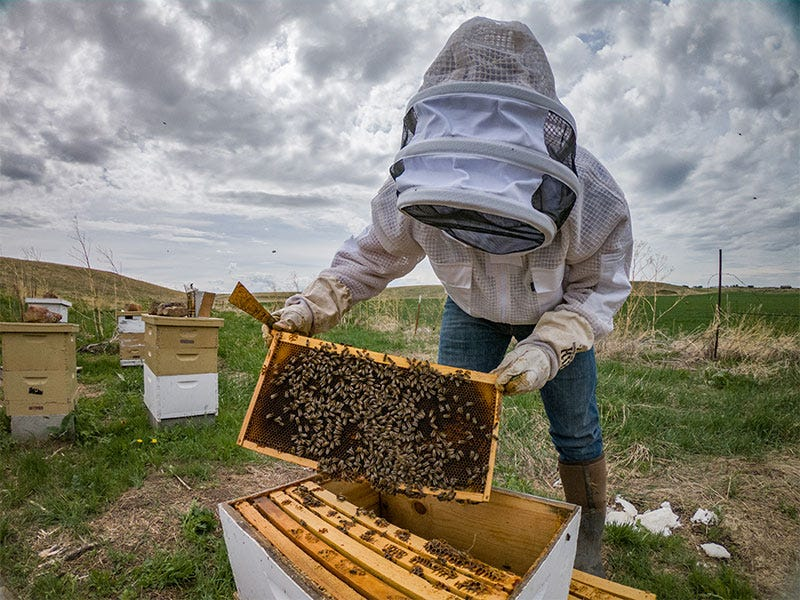 What Equipment do I Need to Get Started Beekeeping?