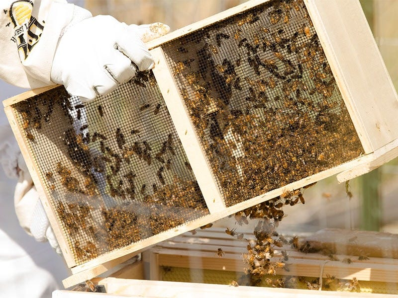 How do I Get my Bees?
