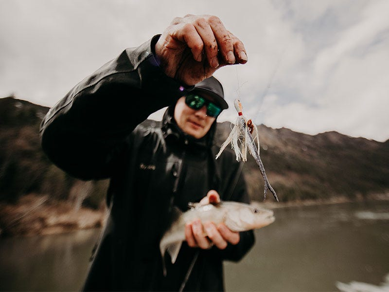 What is the Best Color Lure for Walleye?