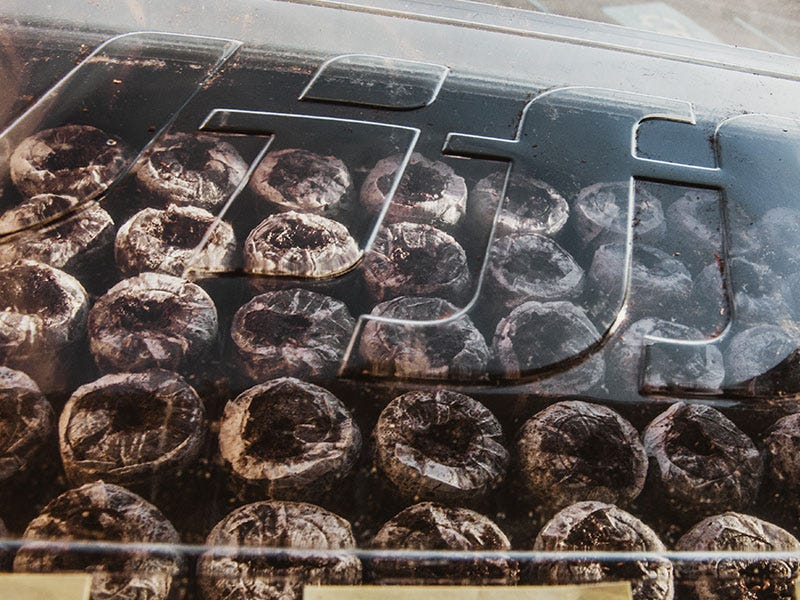 Starting Seeds Indoors: What You Need to Make Your Seedlings Successful