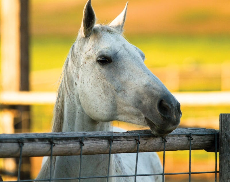 year-round-horse-health-tips-6