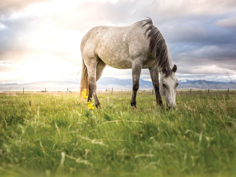 year-round-horse-health-tips-7