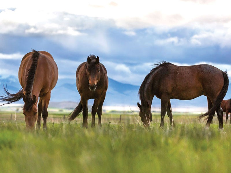 Year-Round Tips to Keep Your Horse Healthy