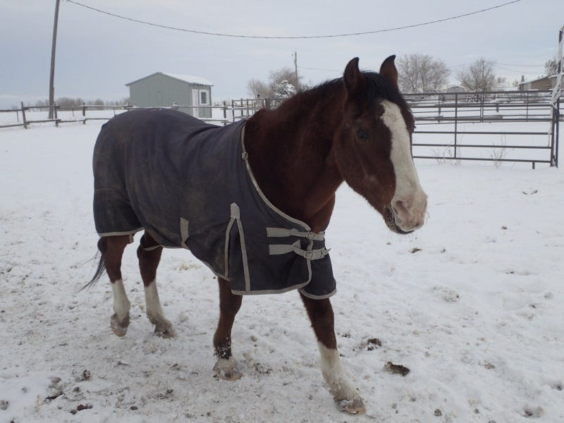 How To Keep Animals Healthy In Winter: Tips From Livestock Owners In Montana
