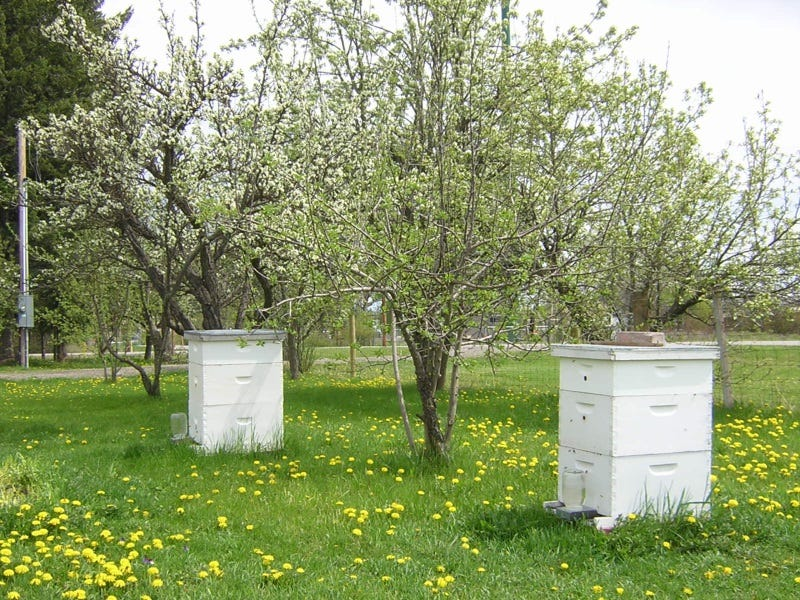 Healthy hives in the spring.