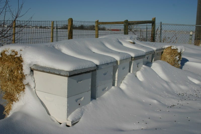 Hives in the winter. Dead bees in front. Grisak