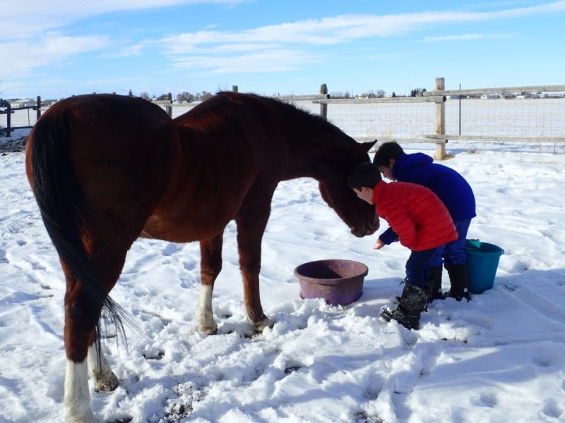 How-To-Keep-Animals-Healthy-In-Winter-Tips-From-Livestock-Owners-In-Montana-1