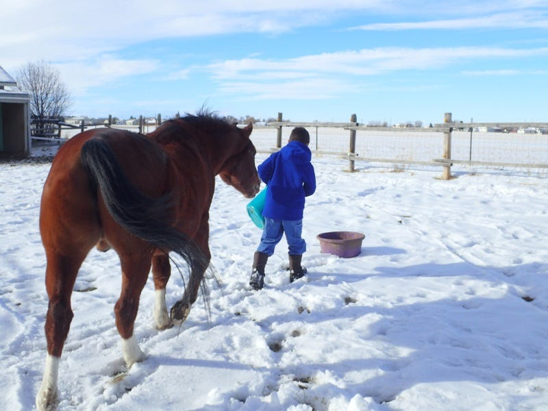 How-To-Keep-Animals-Healthy-In-Winter-Tips-From-Livestock-Owners-In-Montana