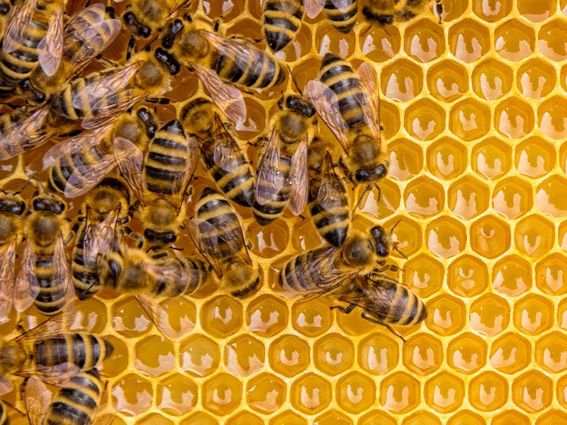 Pre-Order Live Bees Now through March
